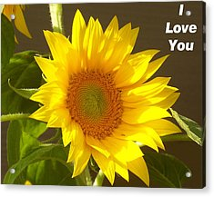 I Love You Sunflower Photograph By Belinda Lee