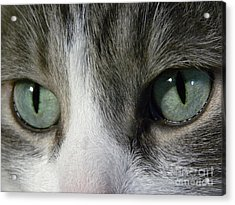 I Only Have Eyes For You Acrylic Print by Laura Yamada