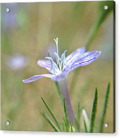 Acrylic Print featuring the photograph I Pick You by Kevin Bergen