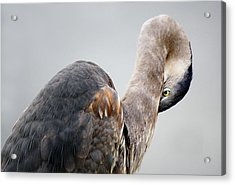 I See You - # 10 Acrylic Print by Paulette Thomas