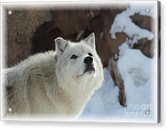 I See You Acrylic Print by Brenda Henley