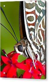 Acrylic Print featuring the photograph I See You Butterfly by John Hoey
