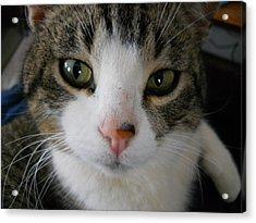 I See You Cat Acrylic Print by Kent Lorentzen