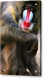 I See You Acrylic Print by Diana Angstadt
