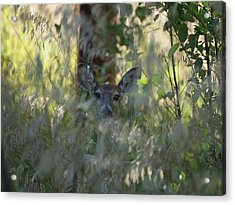I See You - Do You See Me?  Acrylic Print by HW Kateley