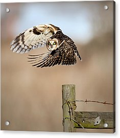 I See You! Acrylic Print by Fion Wong