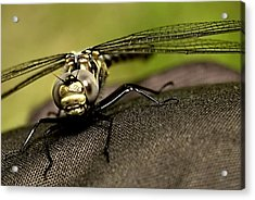 Acrylic Print featuring the photograph I See You by Gary Wightman