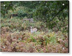 I See You Acrylic Print by Mark Severn