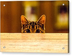 I See You Acrylic Print by Mike Ste Marie