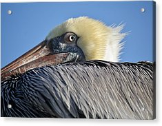 I See You Acrylic Print by Paulette Thomas