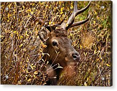 I See You Acrylic Print by Steven Reed
