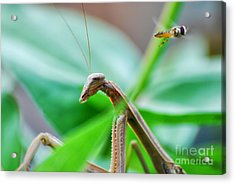 Acrylic Print featuring the photograph I See You by Thomas Woolworth