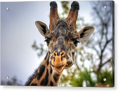 I See You Acrylic Print by Tim Stanley