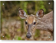 I See You Acrylic Print by Timothy J Berndt