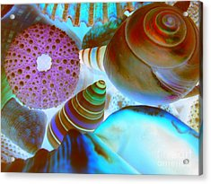 Acrylic Print featuring the photograph I Sell Seashells Down By The Seashore by Janice Westerberg