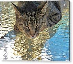 I Sleep On Water Acrylic Print by Judy Via-Wolff