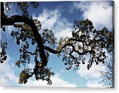 I Touch The Sky Acrylic Print by Laurie Search