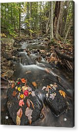 I Want More Acrylic Print by Jon Glaser