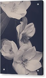 I Was Always Your Flower Acrylic Print by Laurie Search