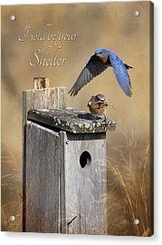 I Will Be Your Shelter Acrylic Print by Lori Deiter