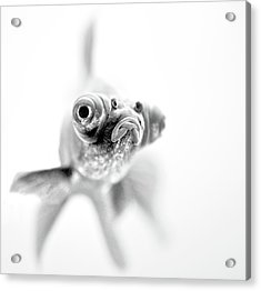 I'm Ready For My Close Up... Acrylic Print