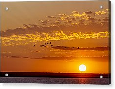 Acrylic Print featuring the photograph Ibis Flyover At Sunset by Rob Graham