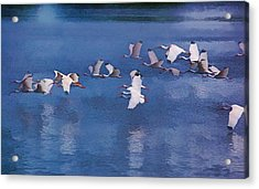 Acrylic Print featuring the photograph Ibis In Flight by Pamela Blizzard