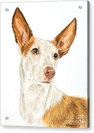 Ibizan Hound In Pastel Acrylic Print