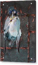 Icarus Mechanika Acrylic Print