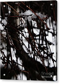 Ice 2 Acrylic Print by Linda Shafer