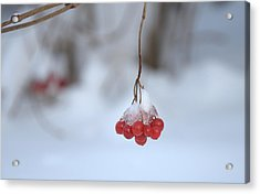 Acrylic Print featuring the photograph Ice Berries by Sabine Edrissi