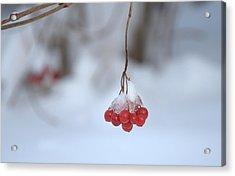 Ice Berries Acrylic Print by Sabine Edrissi