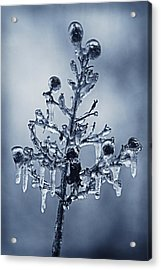 Ice Bouquet Acrylic Print by Linda Segerson