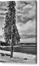 Ice Coated Tree Acrylic Print by Louise Heusinkveld