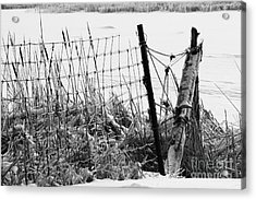 Ice Coated Wire Fence And Rushes After A Winter Storm Acrylic Print