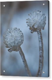 Acrylic Print featuring the photograph Ice-covered Winter Flowers With Blue Background by Cascade Colors
