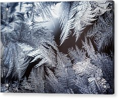 Ice Crystals Acrylic Print by Scott Norris