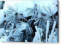 Ice Daisies Acrylic Print