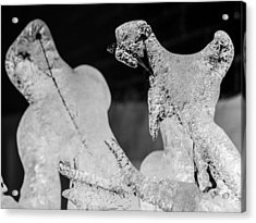 Ice Fight Acrylic Print by Carl Engman