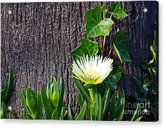 Ice Flower With Vine Acrylic Print
