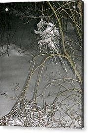 Ice Imp Acrylic Print by Azthet Photography