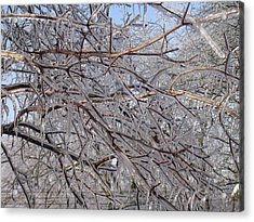 Ice In December Acrylic Print by Dusty Reed