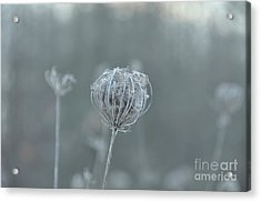 Ice Is In The Air Acrylic Print