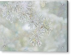 Ice Needles Acrylic Print