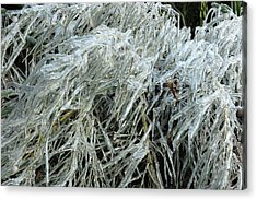 Ice On Bamboo Leaves Acrylic Print
