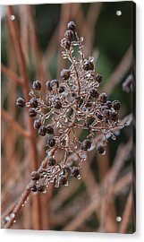 Ice On Berries Acrylic Print by Patricia Schaefer