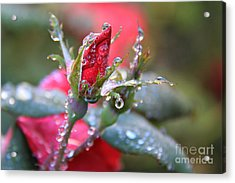 Ice Roses Acrylic Print