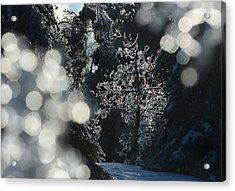 Ice Tree-5074 Acrylic Print
