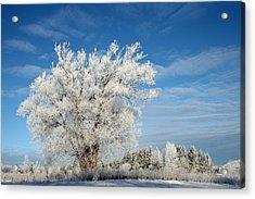 Ice Tree Acrylic Print by Brady D Hebert