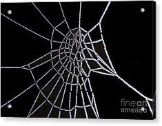 Ice Web Acrylic Print by Carol Lynch